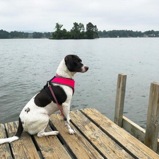 sitting on the dock of the lake modelstatus