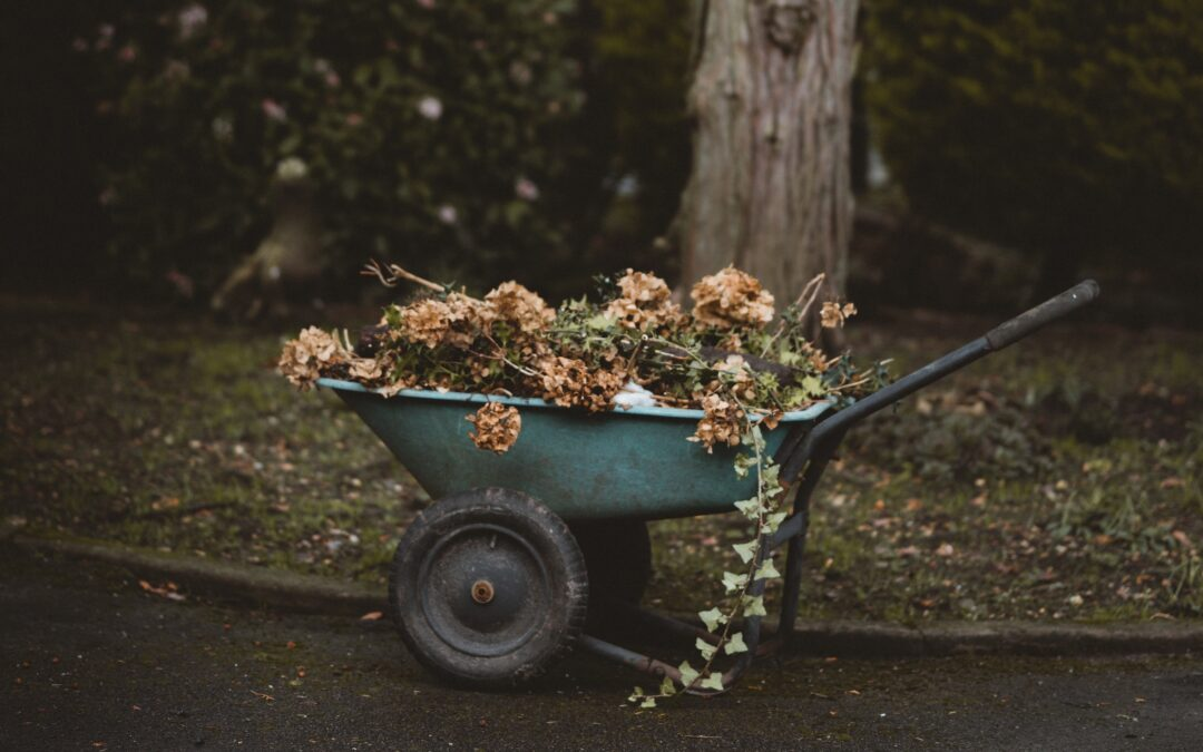 The Good News about Dead Leaves